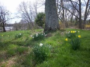 Yard amd Flowers